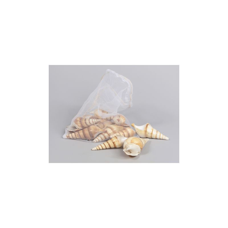 500 G COQUILLAGES BROWN LEUTHANI