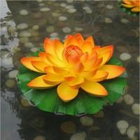 Nénuphar et lotus