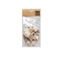 150G DE COQUILLAGES MULLIS BLANCS