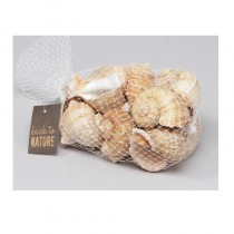 300G DE COQUILLAGES CHIRATTAI