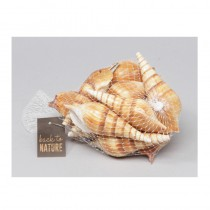 500G DE COQUILLAGES ELUTHANIS MARRONS