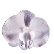 6 ORCHIDEES BLANCHES
