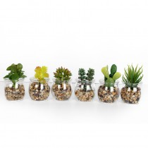MINI SUCCULENT POT VERRE 8X5CM