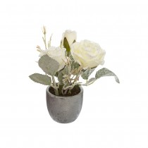 POT ROSES BLANCHES 14CM